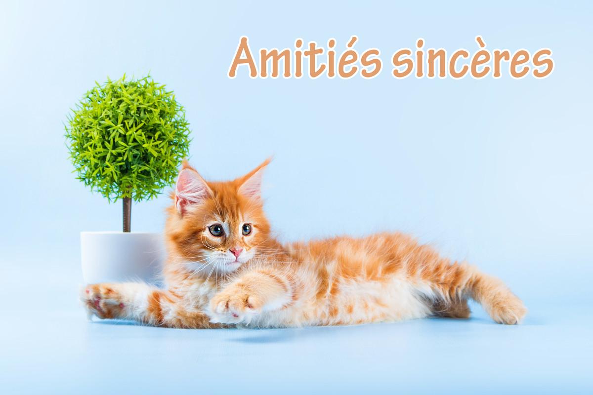 Amities sinceres