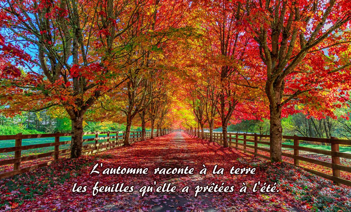 Proverbe d automne