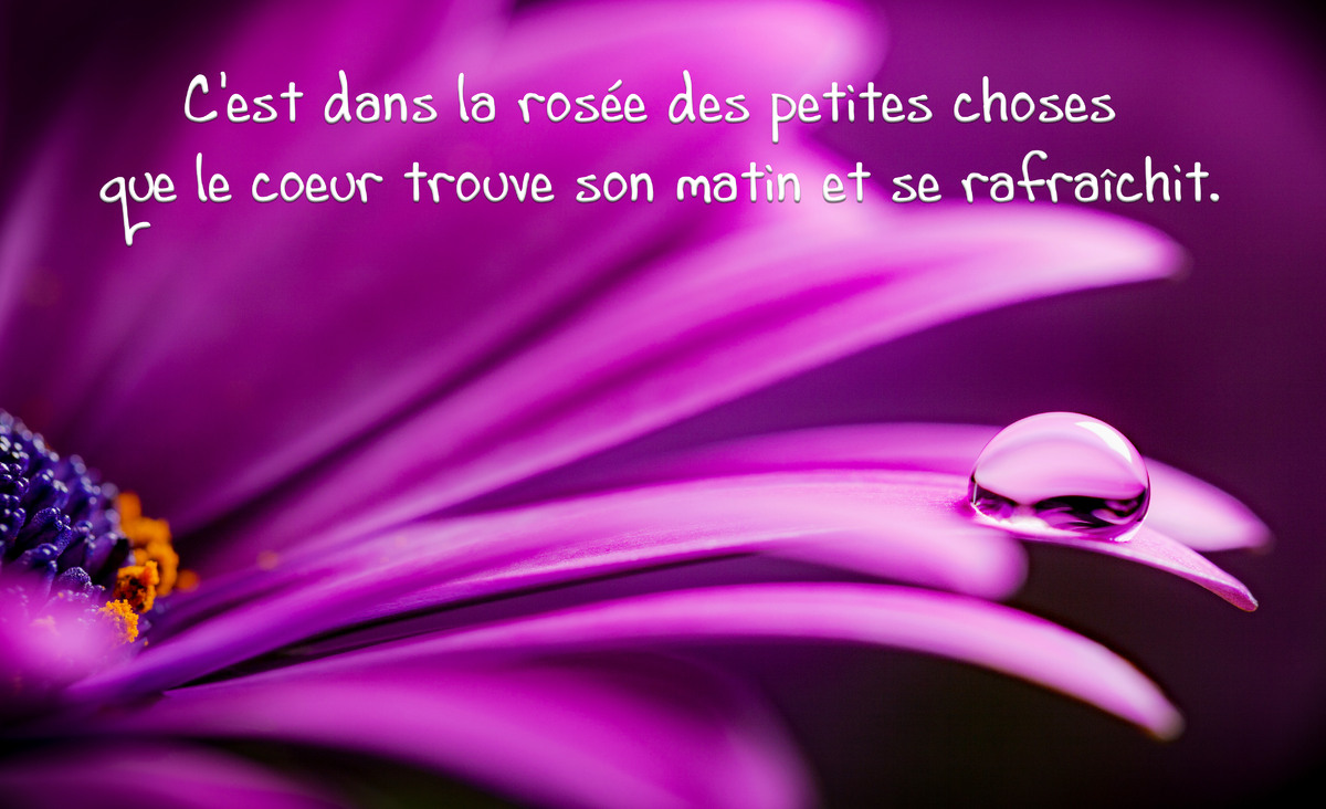 Texte citation phrase