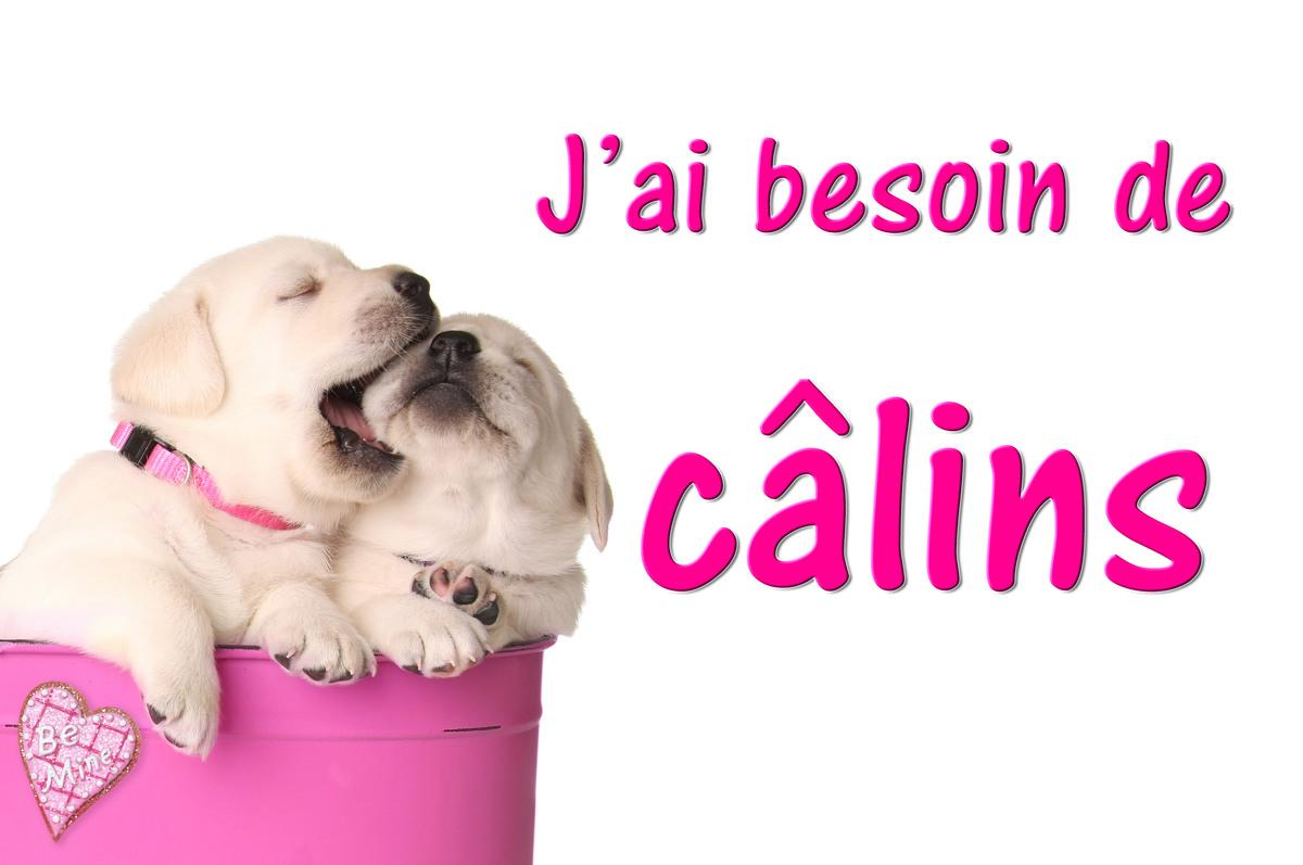 Calins