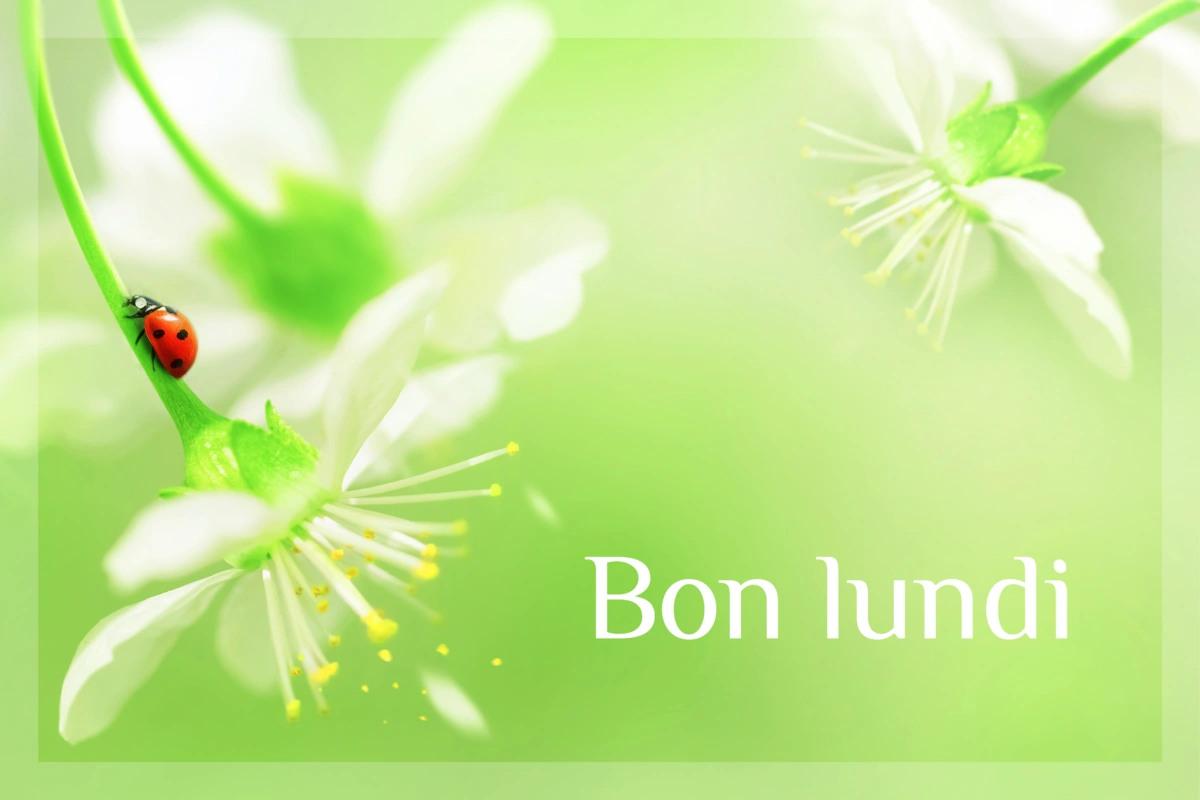 Lundi 24 juin Souhaiter-un-bon-lundi