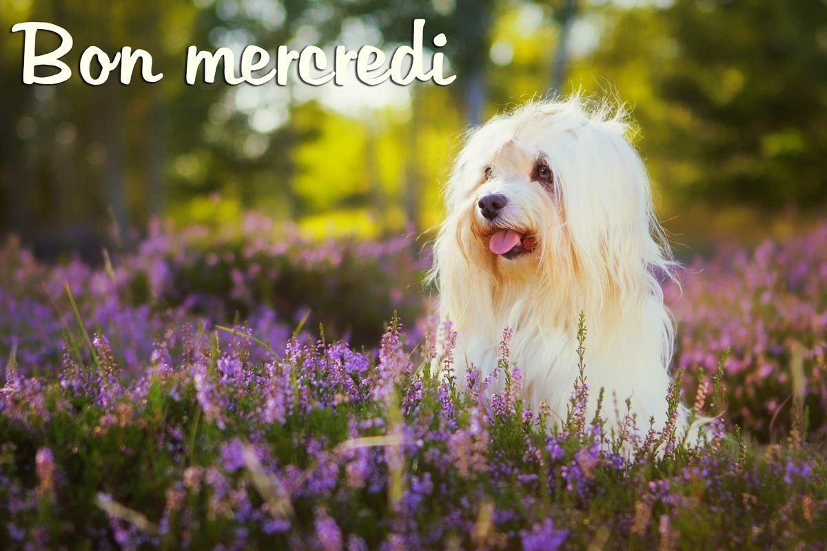 Mercredi photo