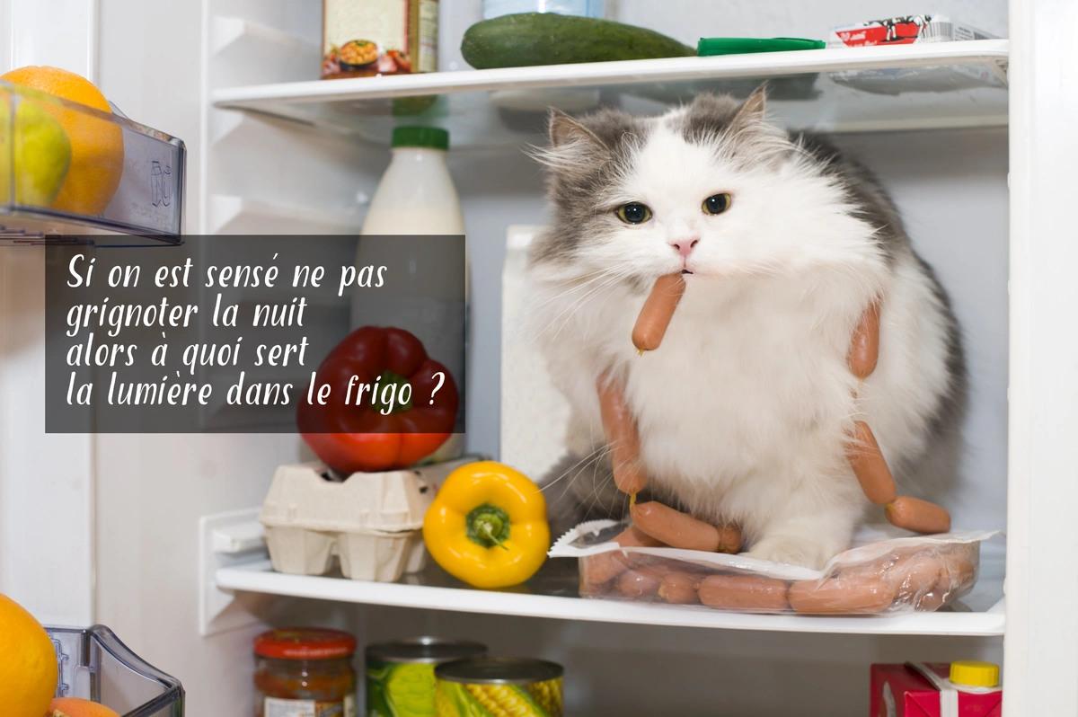 """Résultat de recherche d'images pour """"bonne nuit humour animaux"""""""