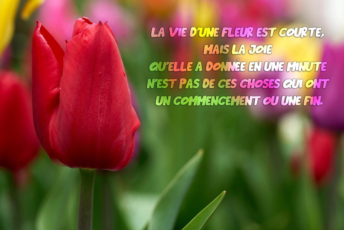 Poesie fleur
