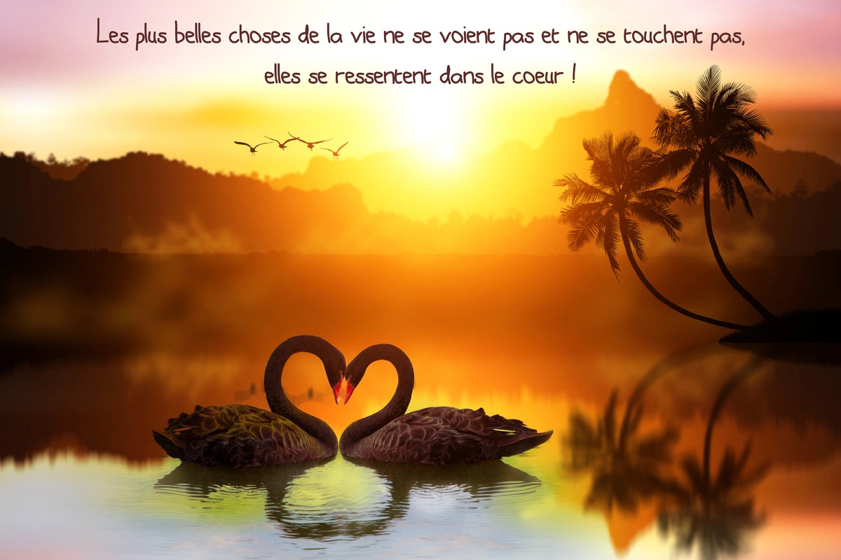 Citation texte vie