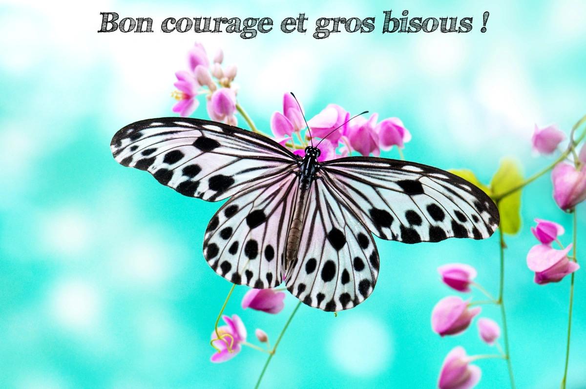 Bon courage bisous