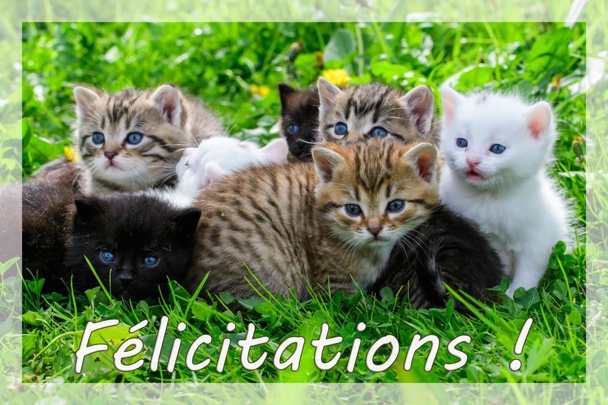 Carte felicitation
