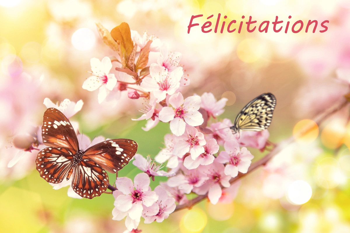 Image felicitation