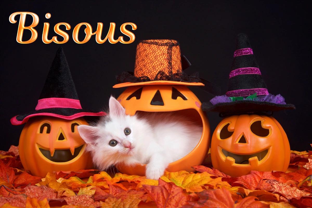 Carte d halloween