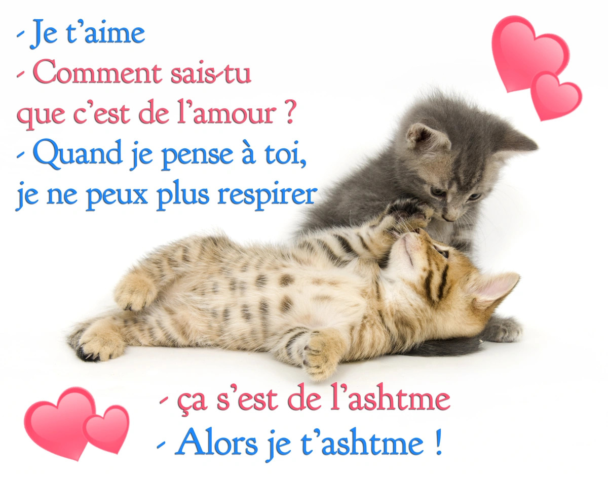Amour humour