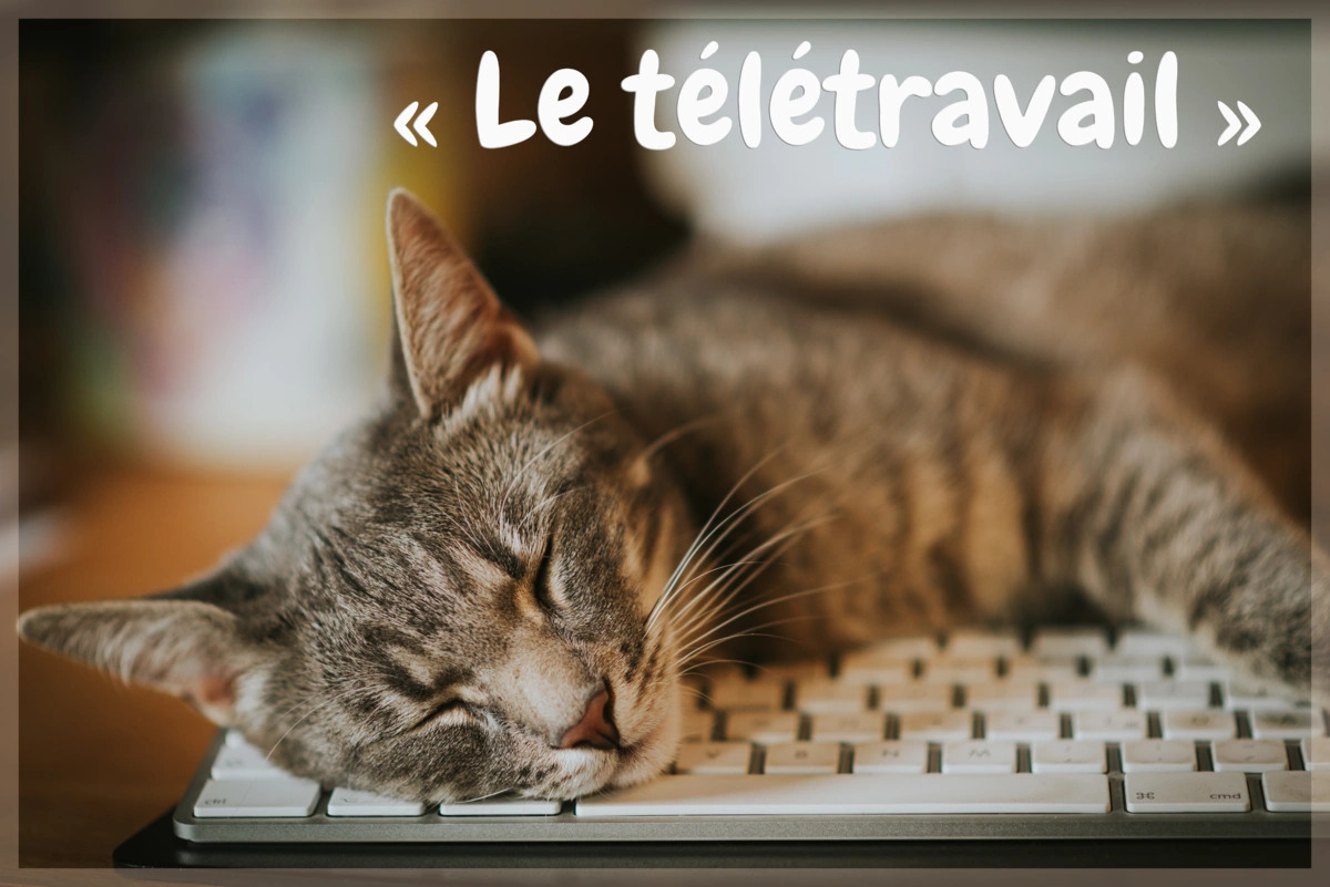 Carte virtuelle teletravail