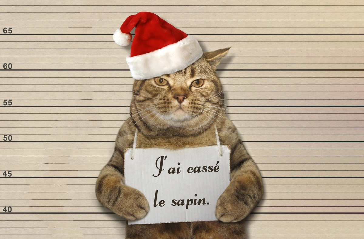 Humour chat noel sapin