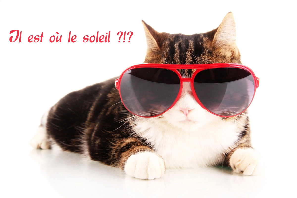 Blague chat