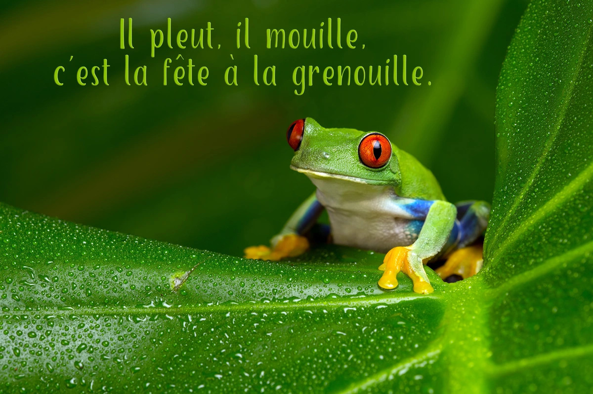 La fete a la grenouille