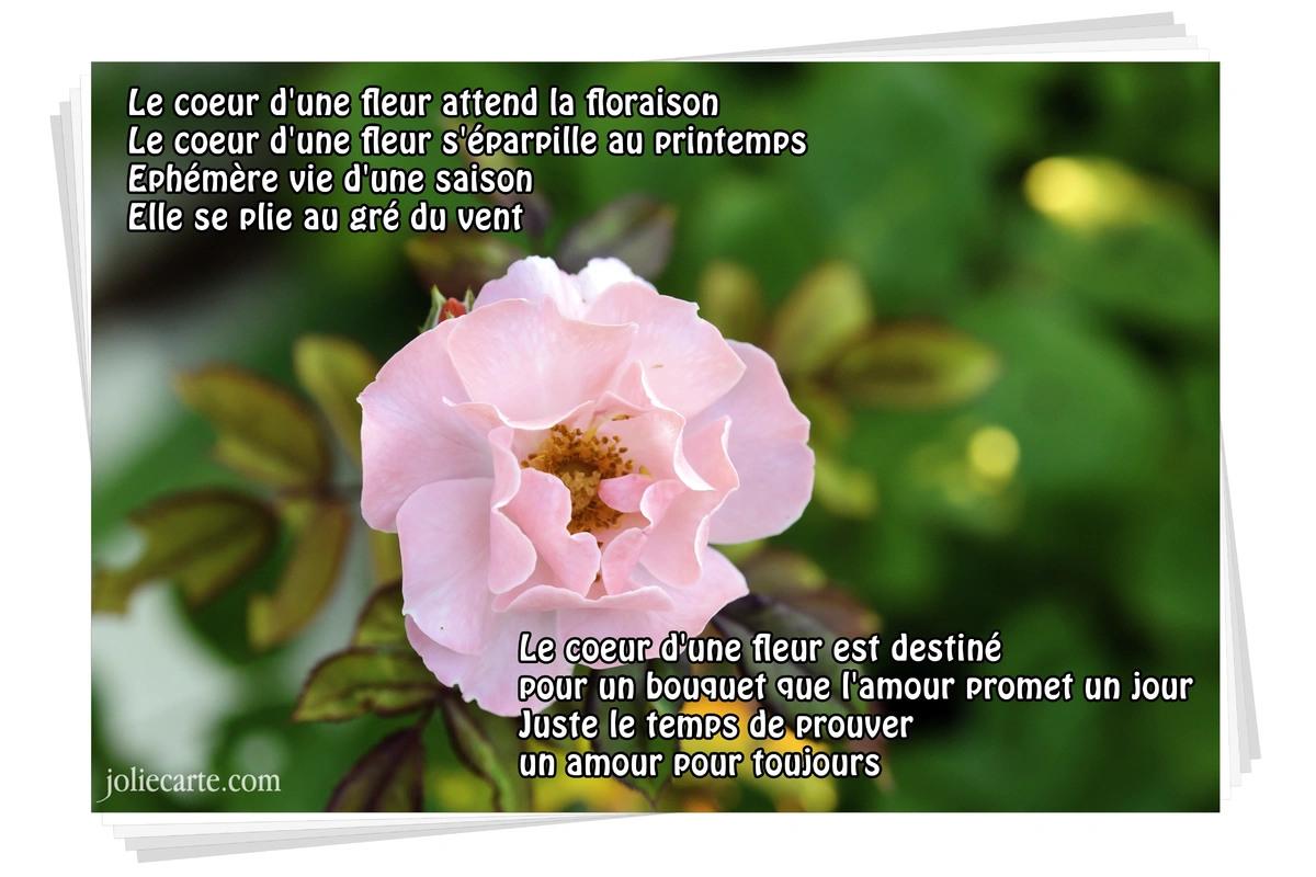 jolie carte bouquet de fleurs Cartes virtuelles poesie et poeme   Joliecarte