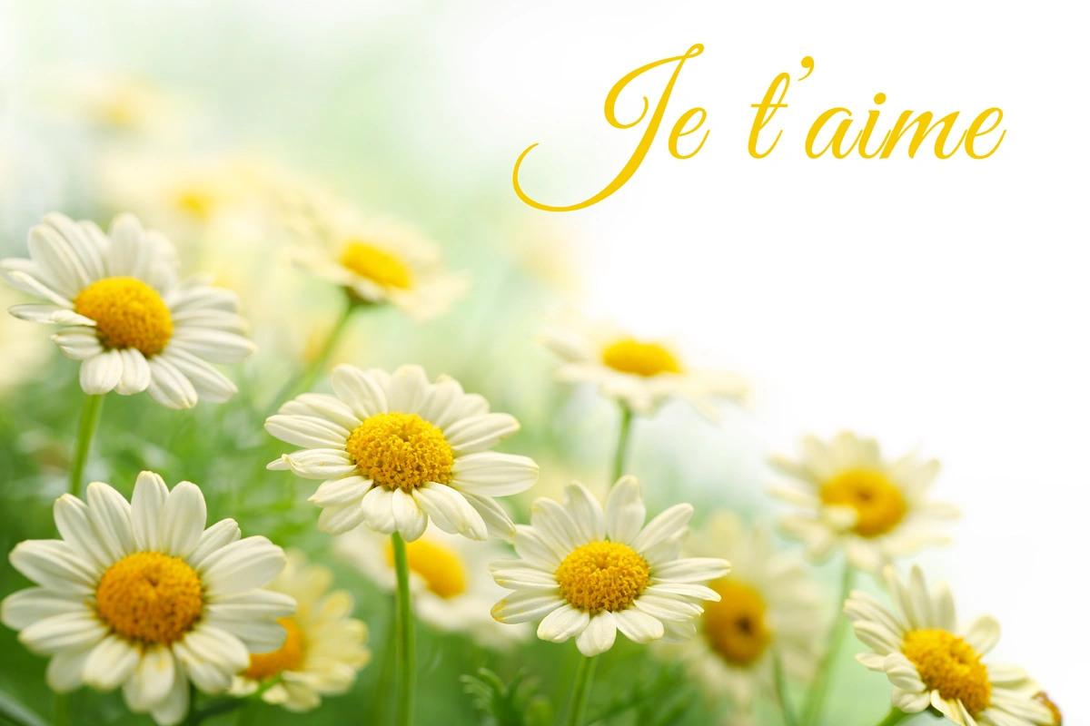 Jet aime fleur