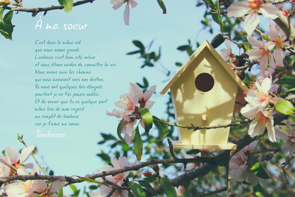 Cartes Virtuelles Poeme Pour Sa Soeur Joliecarte