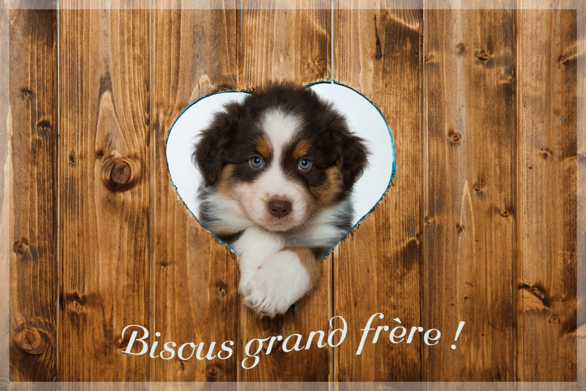 Bisous grand frere
