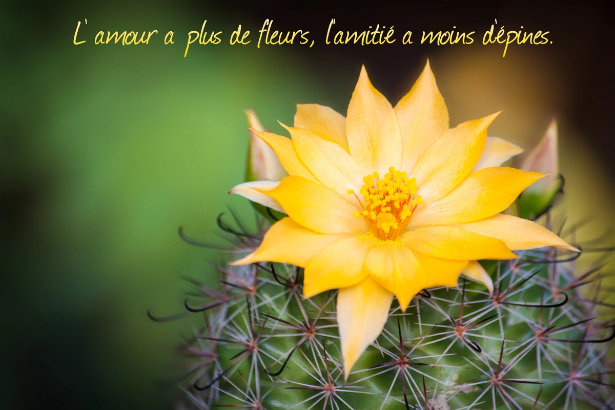 Citation proverbe amitie