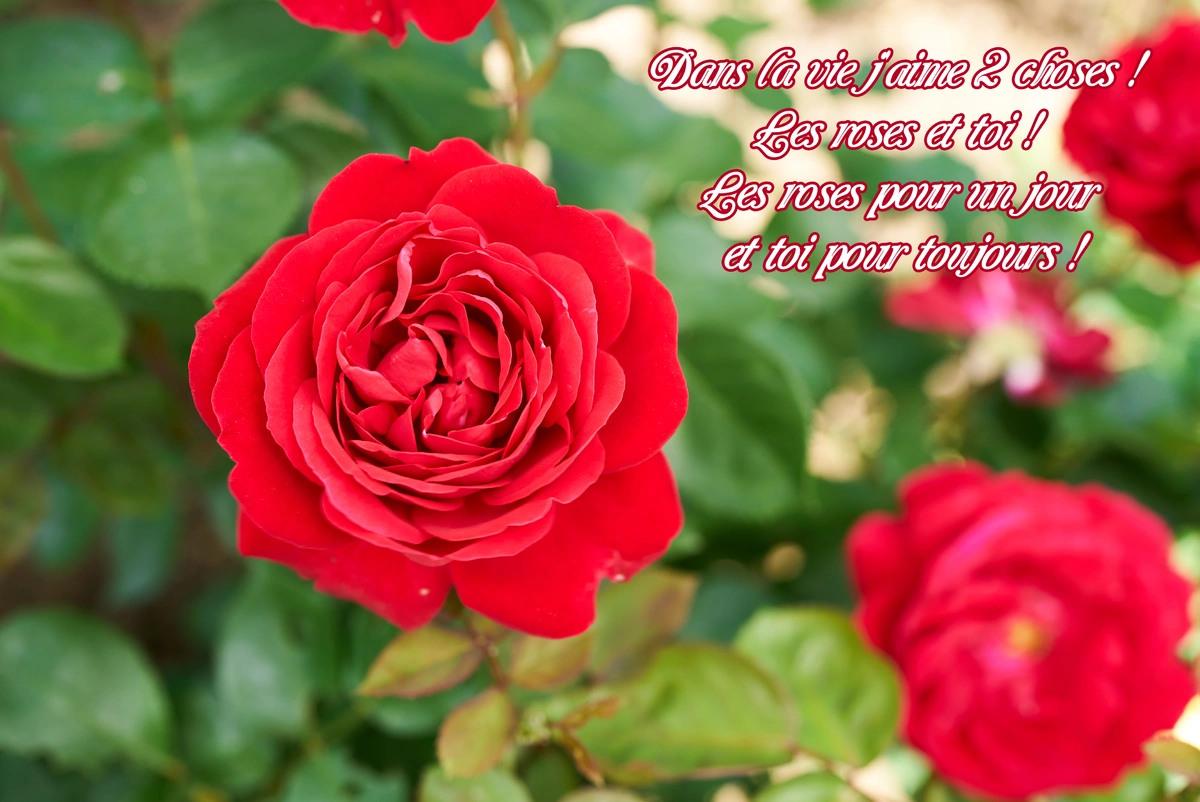 Court poeme amour
