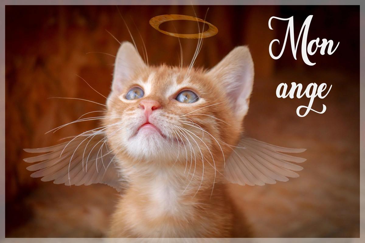 Surnom mon ange
