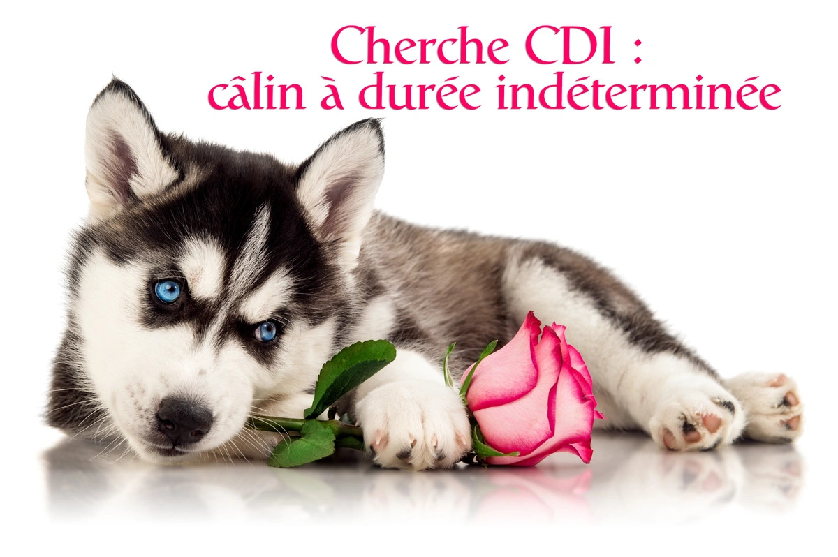 Carte virtuelle calin
