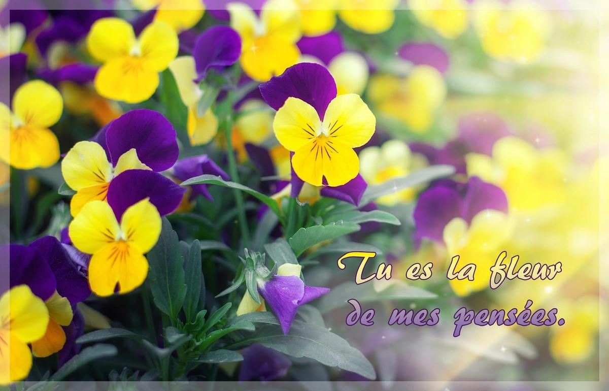 Fleur de mes pensees