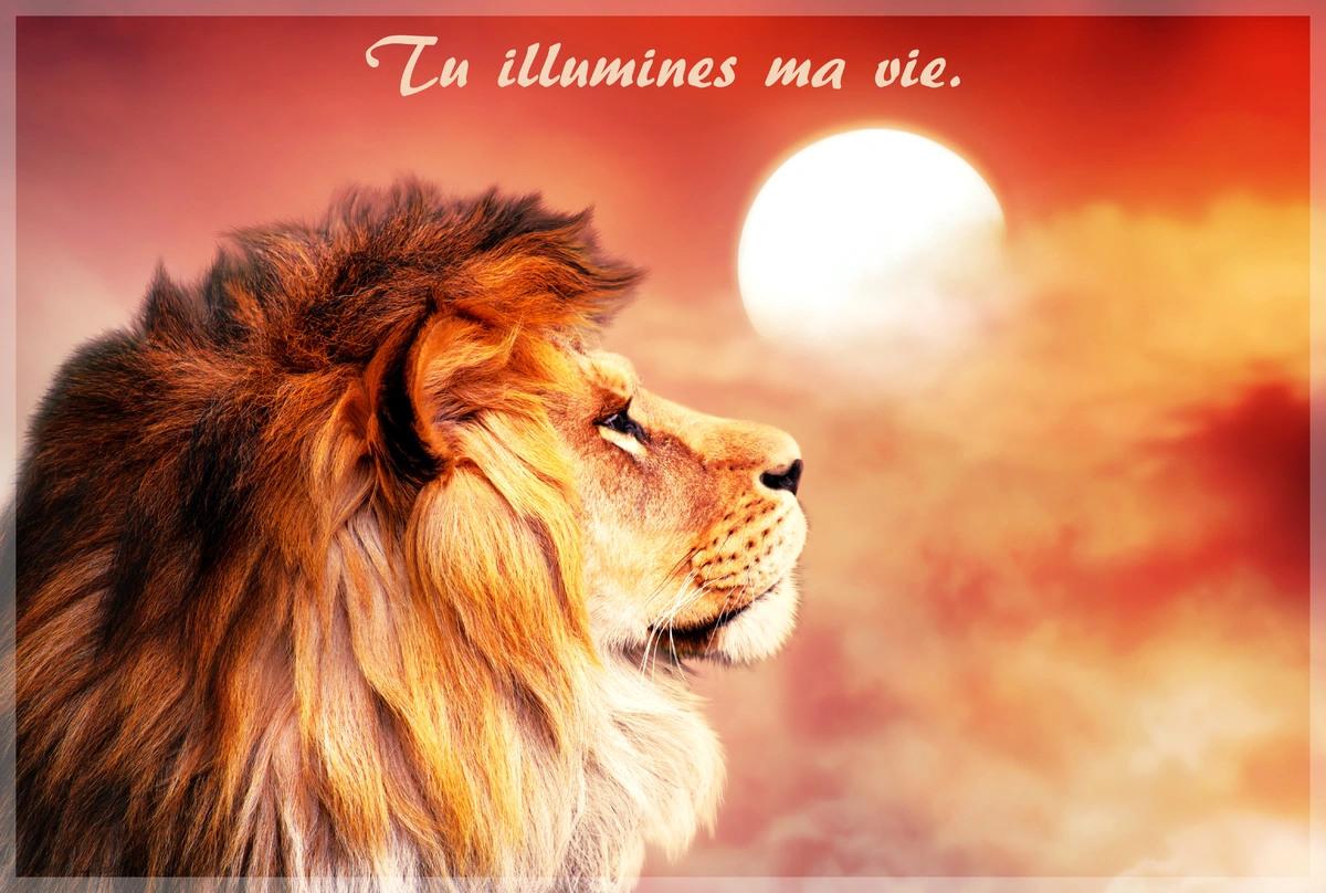 Tu illumines ma vie