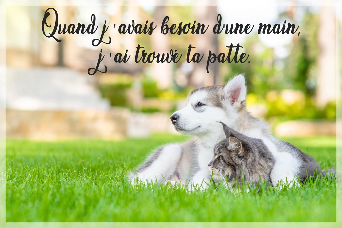 Belle citation animal