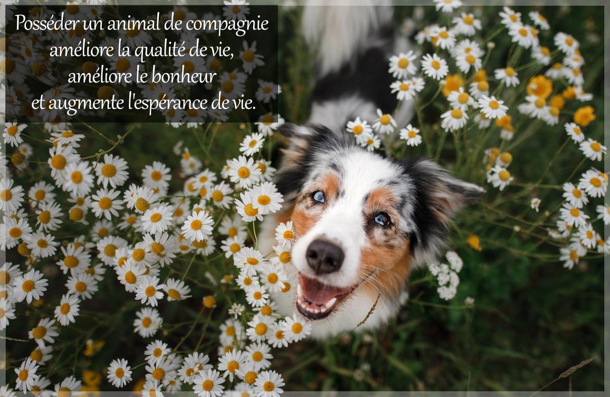 Citation animal de compagnie