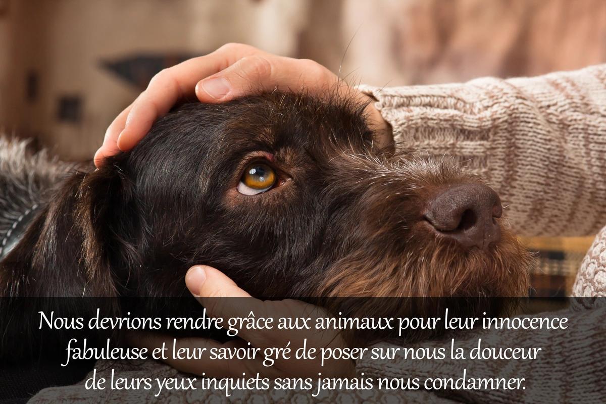 Citation animaux
