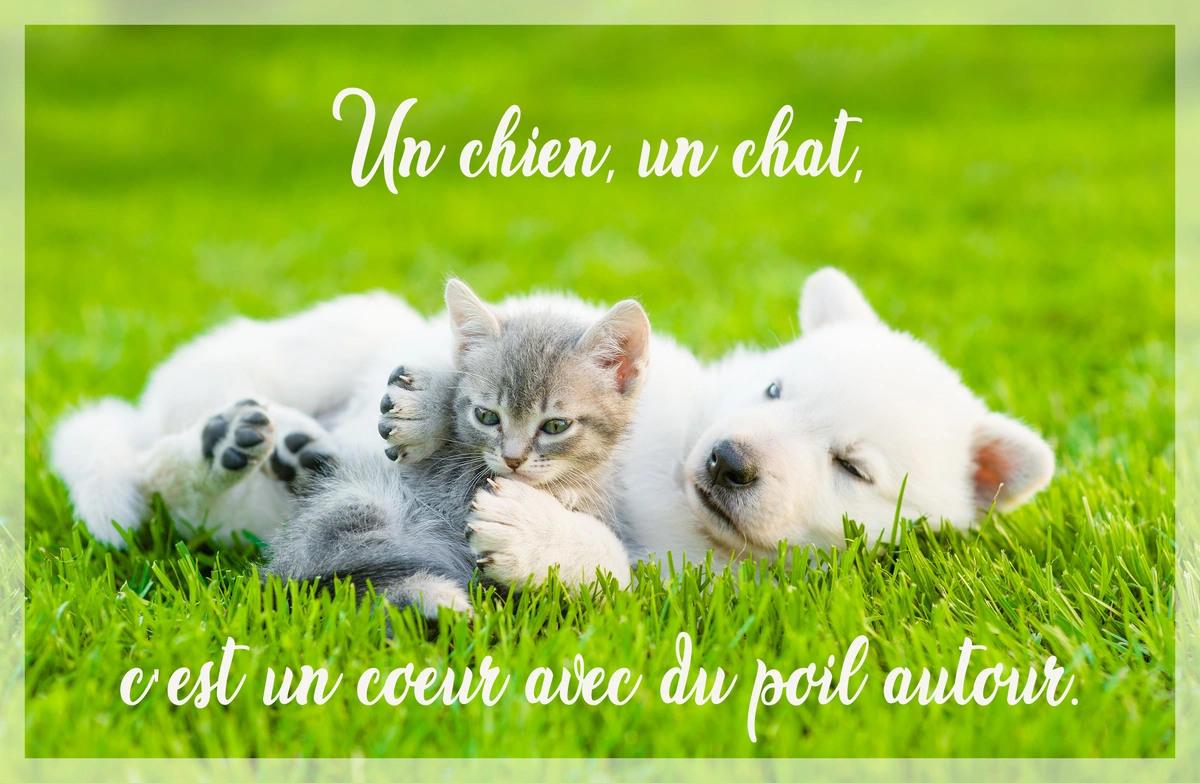 Citation chien chat