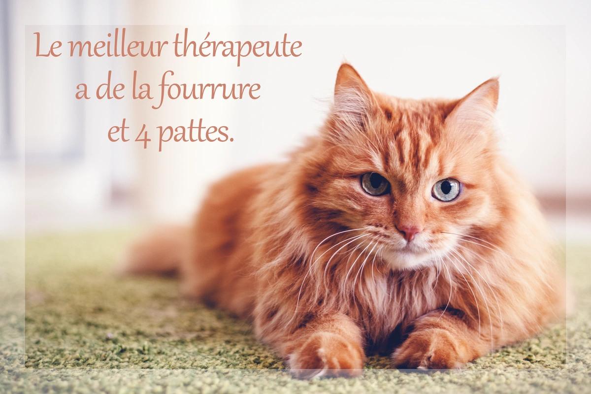 Therapie animal